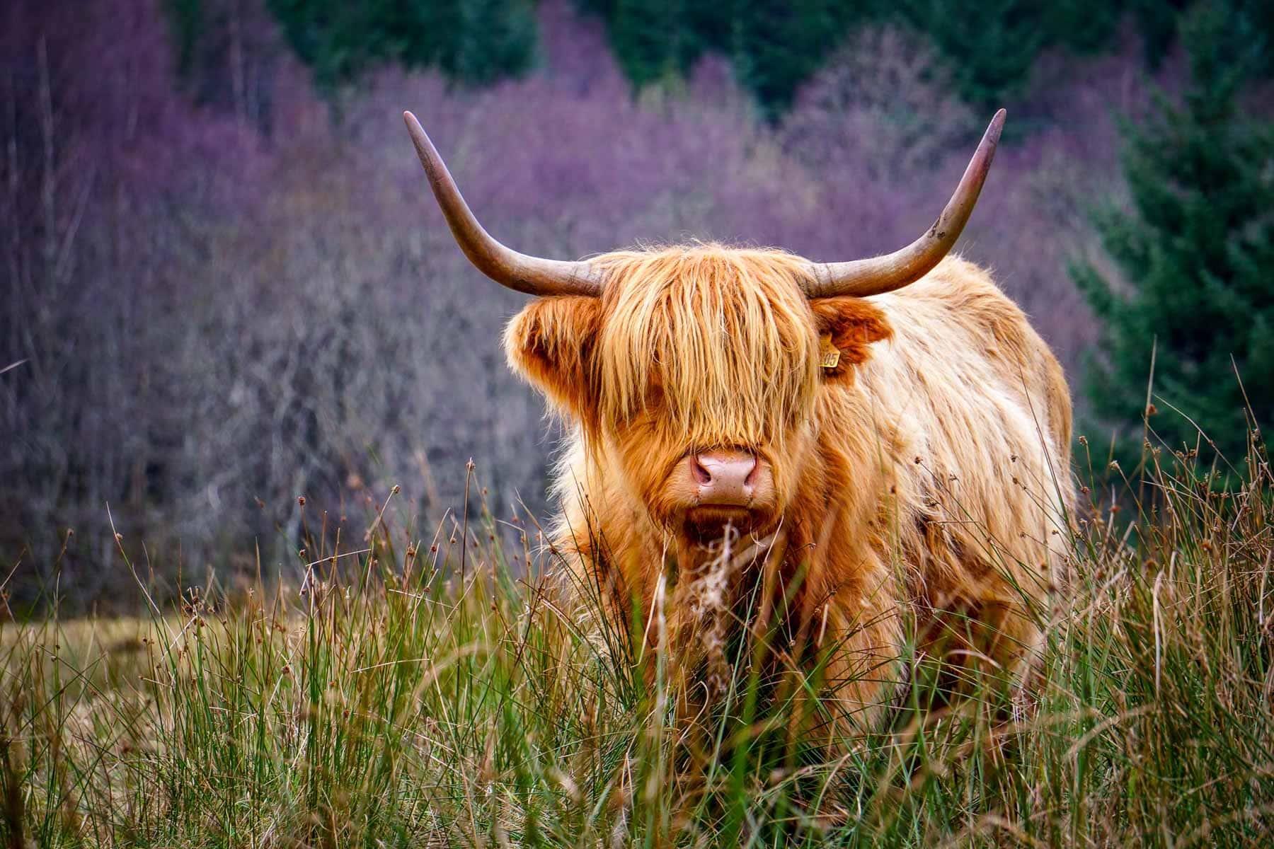 10 day scotland itinerary