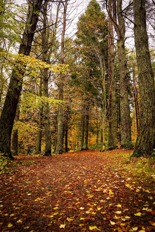 Kinnoull Hill in autumn in Perth, Scotland