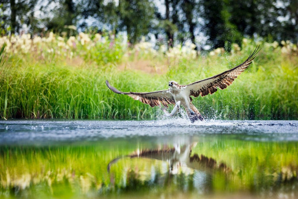 Places To Visit in Scotland For Bird Lovers