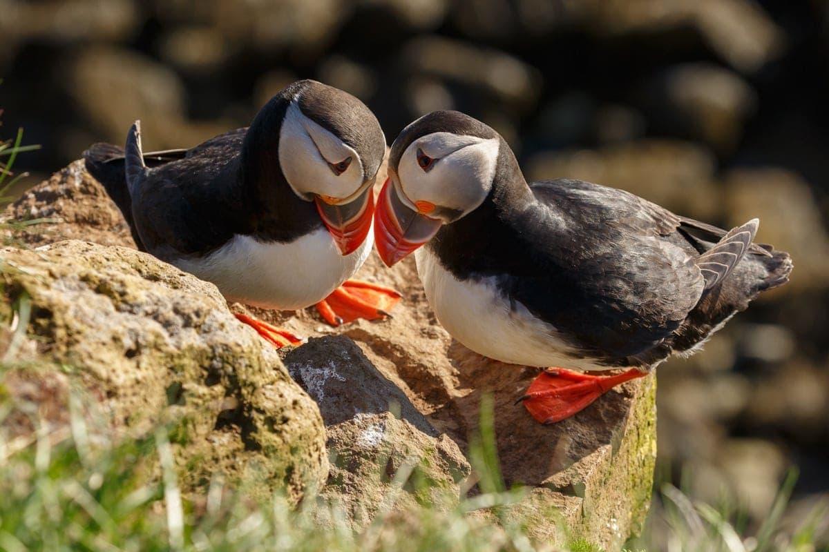 best birdwatching sites in scotland