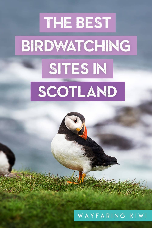 best birdwatching sites in scotland pin