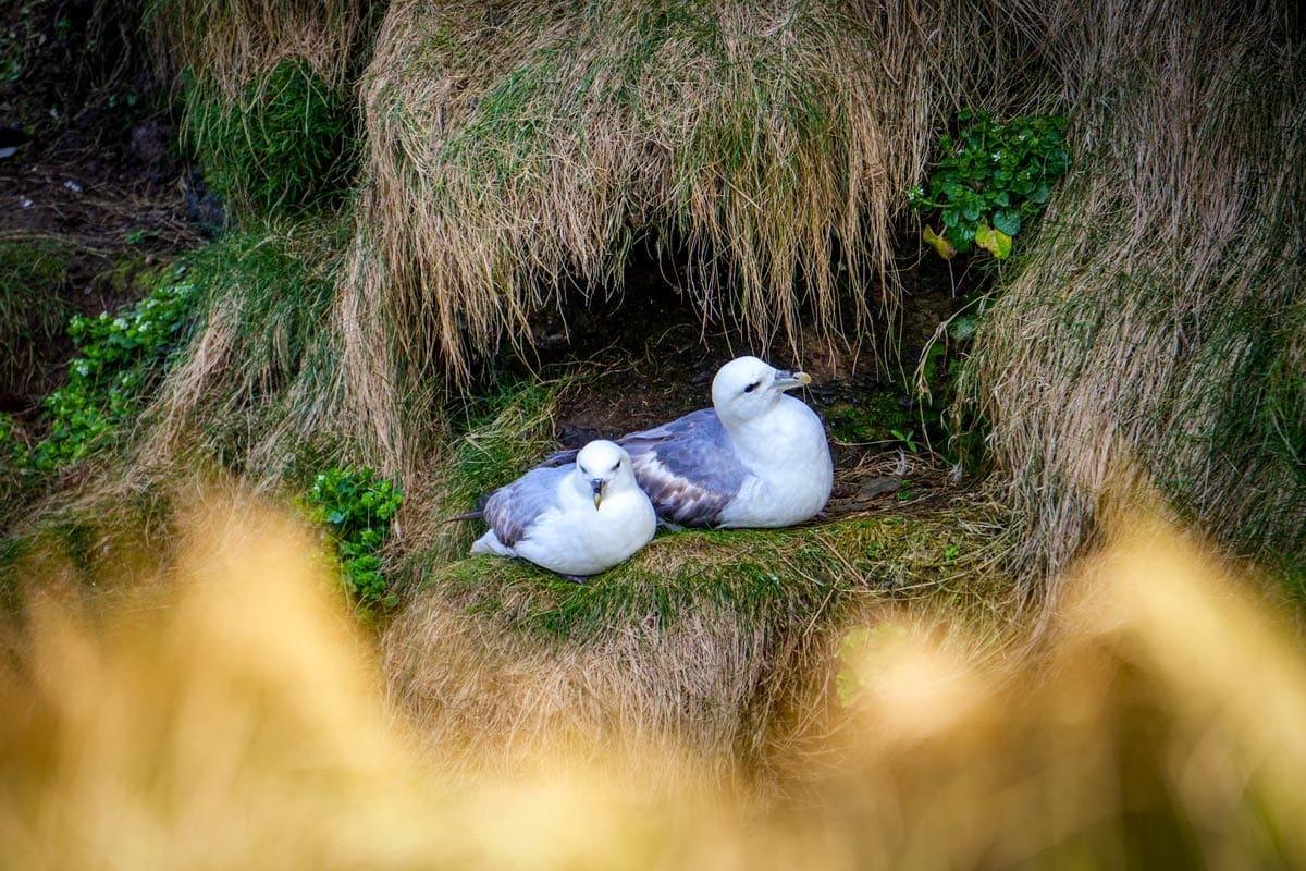 Handa island is one of the best birdwatching sites in scotland
