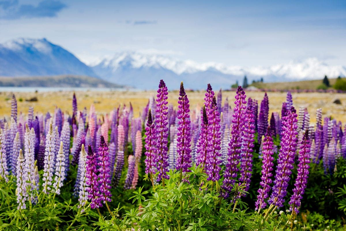 How To Plan A Trip To New Zealand - The Ultimate Guide