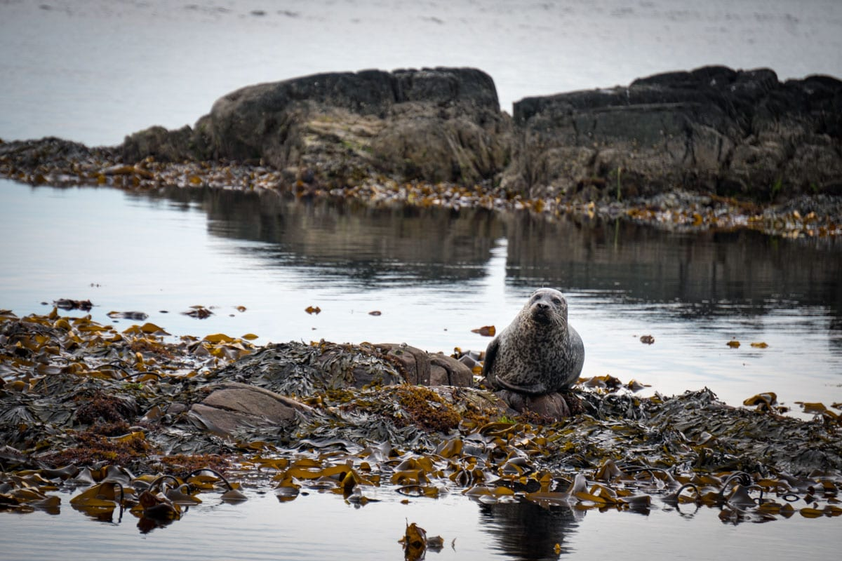 The Perfect 5 Day Islay Itinerary
